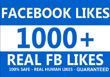 Provde 1000 REAL Facebook likes