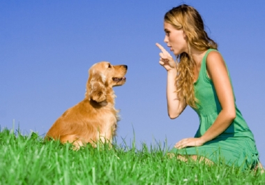Give You 25 Professional articles for dog training
