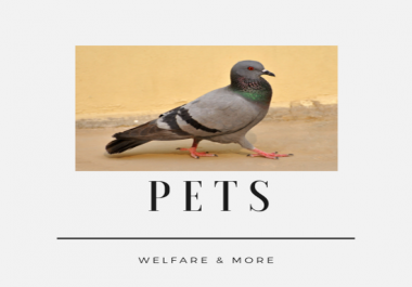 teach you how to lure pigeons not to flee from captivity