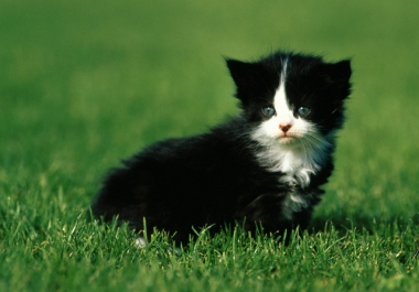 get my cat to kiss you in a birthday or I Love You message