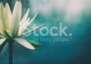 give You 50 HD Stock Photos any kinds