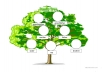 Making a family tree just for you - no matter how big! Show other people your ancestors the way you like!