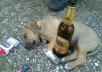 make a photo of my Pitbull Dog in a party or drunk position, with any text or picture you want, displayed on my tablet