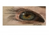 draw an exceptionally realistic eye