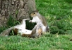give you a one of a kind squirrel photo
