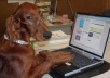 give professional dog and cat health advice as well as suggestions for low cost services in the US