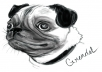 I will draw you a black and white portrait of your pet's head. Any species is fine, though I specialize in dogs. I will not do any revisions, but if you want WIP updates, that can be arranged.