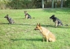 give You A Comprehensive Guide To TRAINING  Your Dog Complete With Videos And MP3