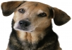 Dog separation anxiety can be heartbreaking for any owner of a new dog and this guide will help you to get your dog over this anxiety. 47 pages of great helpful information from Stephanie Abel about what she did to cure her dog of this after extensive research into the anxiety that her dog was going through. If you have a dog suffering from this you really do need this guide...