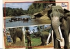 send you 5 Srilankan beautiful post cards
