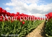 ENHANCE up to 100 of your images with proffesional, customised copright watermark information, any colour you want