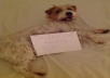 send you a personalised doggy message