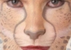 video morph your Face into an Animal