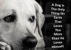 supply a collection of beautiful images and heart rendering stories for all you DOGS, Cats and Horse lovers,