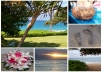 create a beautiful collage, postcard or Facebook cover from your photos