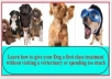 Teach you how to treat and train your dog well without a veterinary doctor