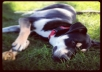 help you with your dogs bad habits