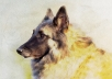 paint a portrait of your pet in digital watercolor