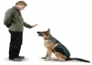 Give You Great Advice For Your Dog