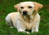 I will write articles for dog training, tips, and many others. These articles will be unique and passed the copyscape.