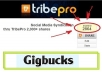 social bookmark, syndicate, 2 ULRs through TribePro. Links will receive over 1000 syndication shares,  500 each