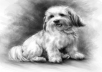 create a stunning digital portrait painting of your pet