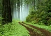 100 google voice accounts