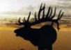 Good Buy on Semi-Guided Elk, Deer and Antelope Hunt in Colorado !!!!!!!!!!!!